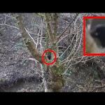 Alienigena Captado en en Bosque