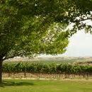 Sawtooth Winery Photos, Ceremony & Reception Venue
