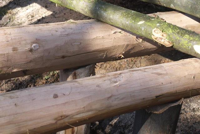 DSC_3726 Building a log bridge