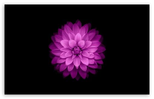 Unduh 800 Wallpaper Apple Flower HD Paling Baru