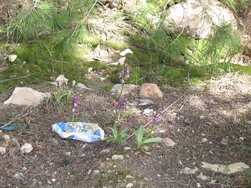 garbage garden2