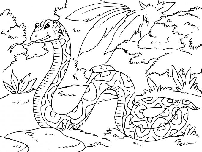 Serpiente En La Selva Para Imprimir Paracolorearnet