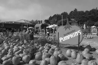 HMB Pumpkin Fest - HMB Pumpkins