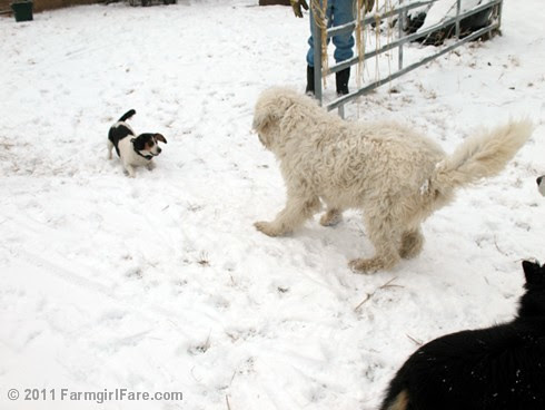 Dogs Playing in the Snow 2