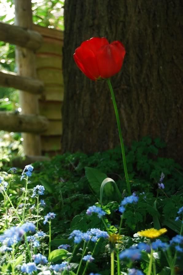 Ouseley Garden