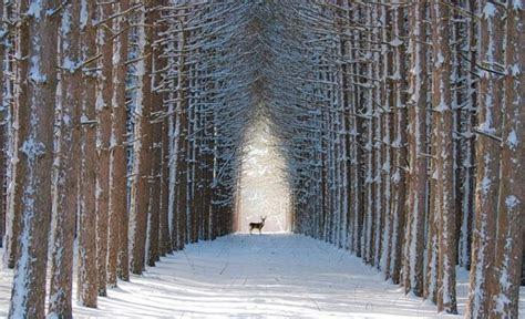 florestas incriveis  parecem ter saido dos contos de