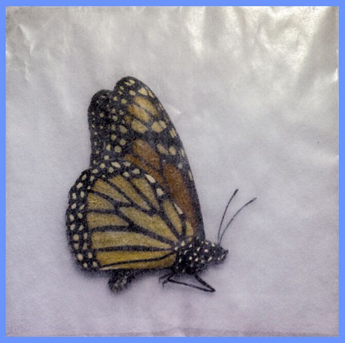 Download BUTTERFLY RELEASE ENVELOPES