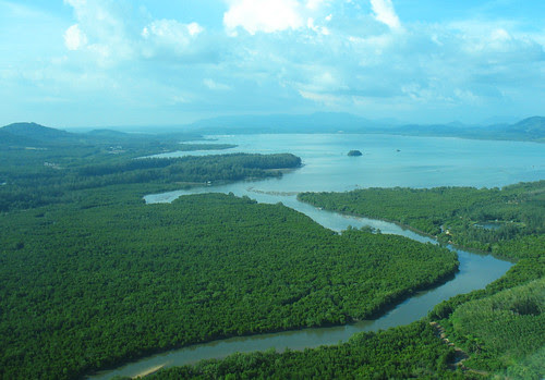Mangroves on the east coast of Phuket