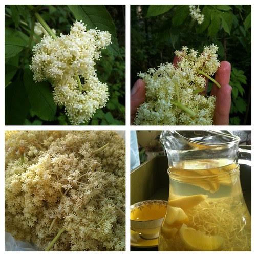 Making Eldeflowers Cordial