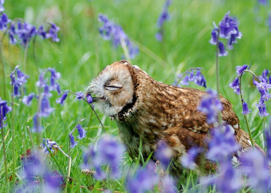 Coruja Flores de cheiro