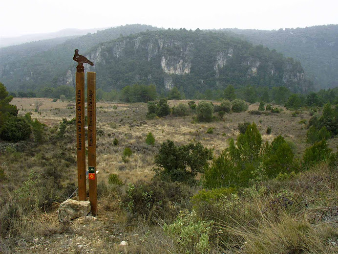 Bosc del Vilalta, a Farena.