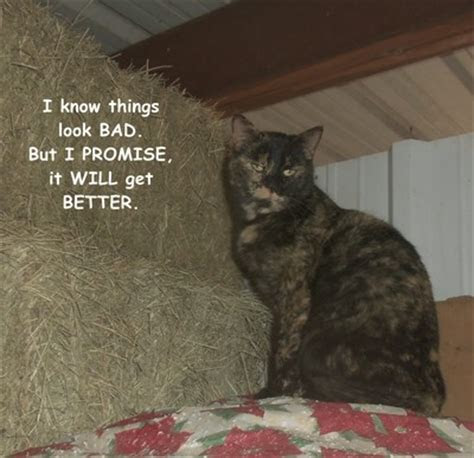 Optimistic Cat! Free Optimism Month eCards, Greeting Cards