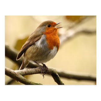 Singing Robin Postcards