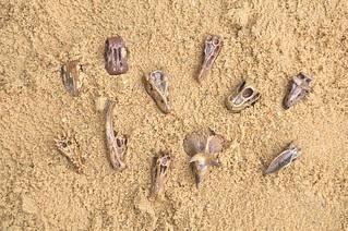 Paleontology Preschool