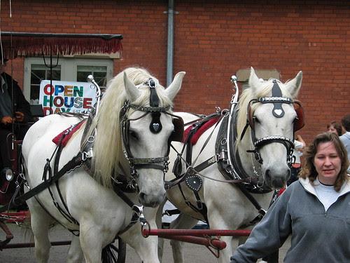 Stowe Horses