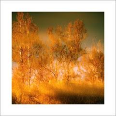 L'automne sur la dune ...!!!