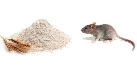 How to Get Rid of Mice in Your Home? ? Recipe
