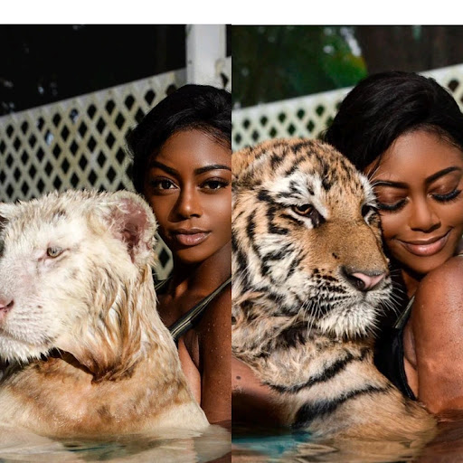 Meet the pretty lady who swims with lions and Tigers; See photos and reactions