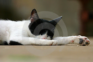 Free Stock Photos: Sleeping Cat Picture. Image: 194378