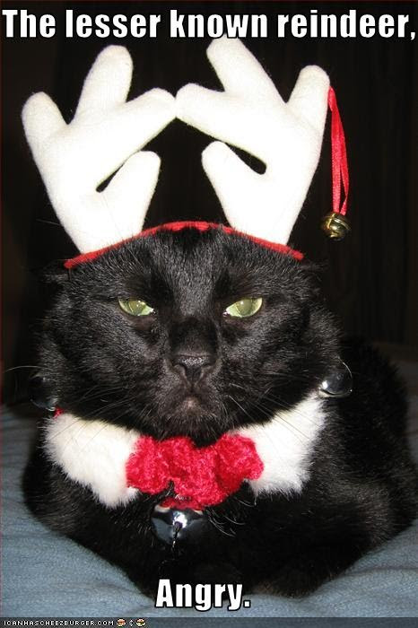 photo of an angry cat wearing felt antlers