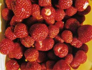 Jordgubbar - visst är det frestande