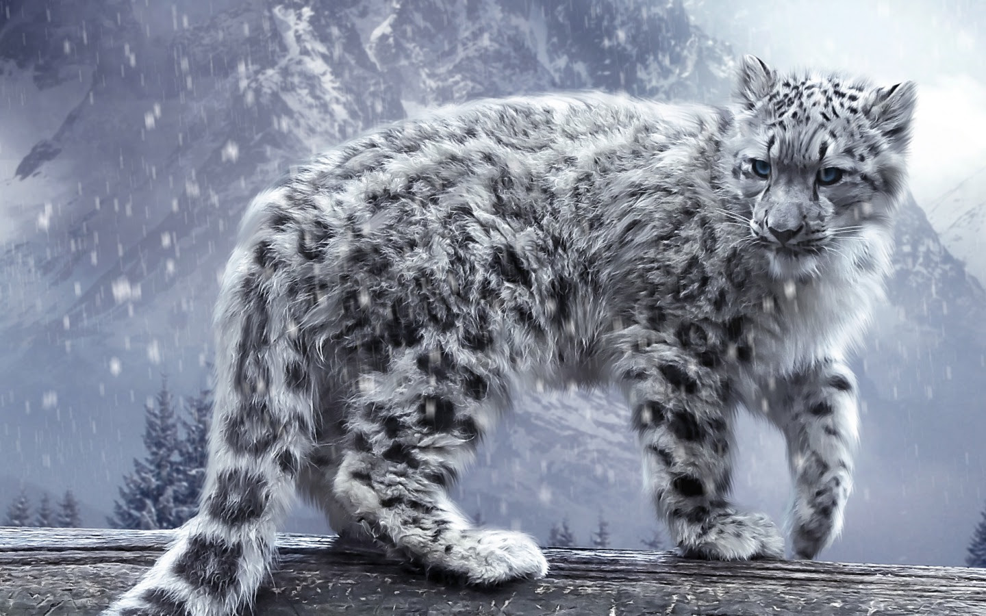 Snow Leopard Photos Wallpaper Wallpapers Heroes
