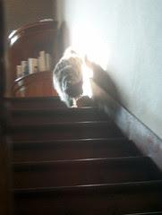 Miss Cat Flower en haut des marches