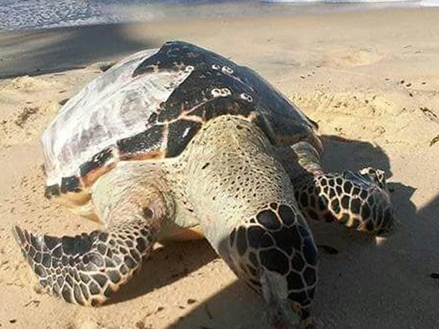 Segundo ONG, não é possível determinar causa da morte do animal (Foto: Site Prado Notícia)
