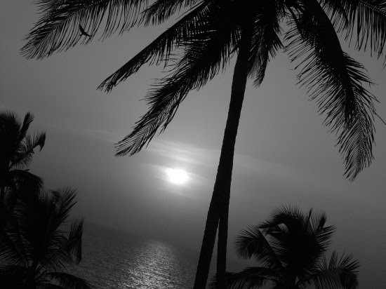 black and white pictures. Get Big lack-white-palm photo