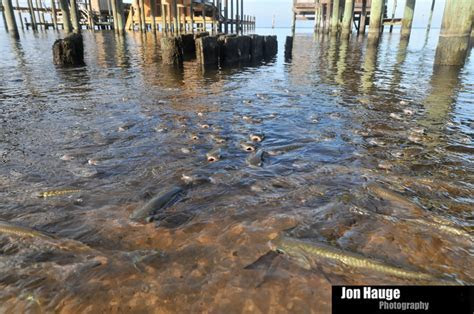 Jon Hauge Photographer Mobile Pensacola   Point Clear