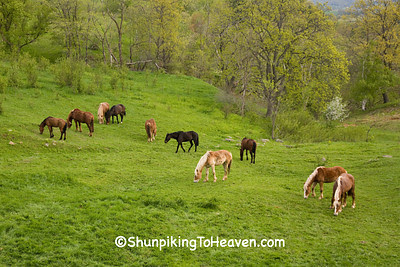 Horses in the Pasture, Monroe County, Wisconsin