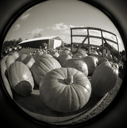 Load o'pumpkins