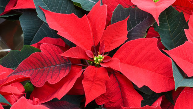 Top 7 Holiday Allergy Triggers Live Oak Allergy Asthma Immunology Specialists