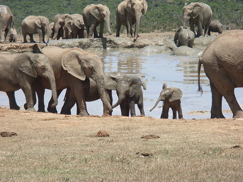 Sydafrika feb 2007 212