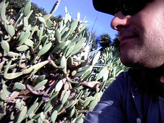 Cacti in SB