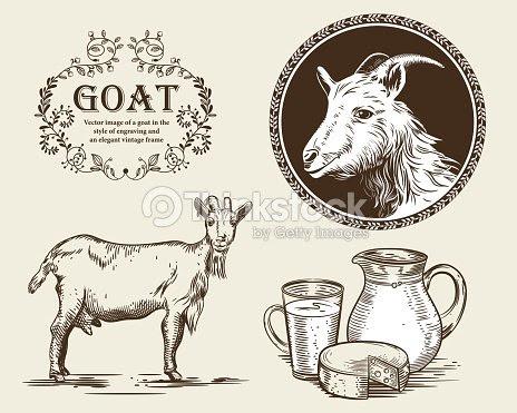 ヤギ山羊ミルクヤギのチーズの水差しのベクター画像彫刻のスタイルで農業