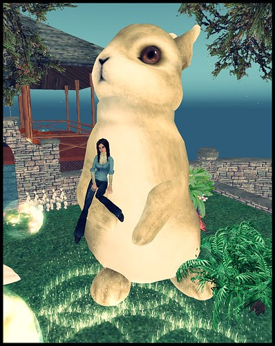 My new bunneh!