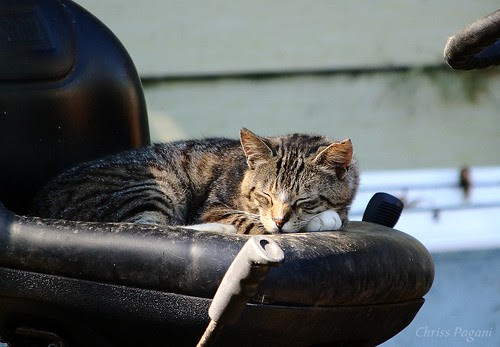 Sleeping Tractor Cat