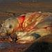 Seal birth 13 (2:32pm) by nutmeg66