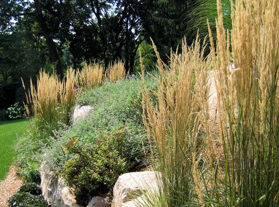Deer Resistant Landscaping Clc Landscape Design