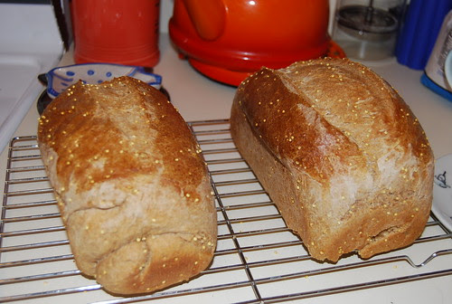 Whole wheat Millet Bread