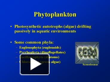 Ppt Phytoplankton Powerpoint Presentation Free To View Id 72a93 Zdc1z
