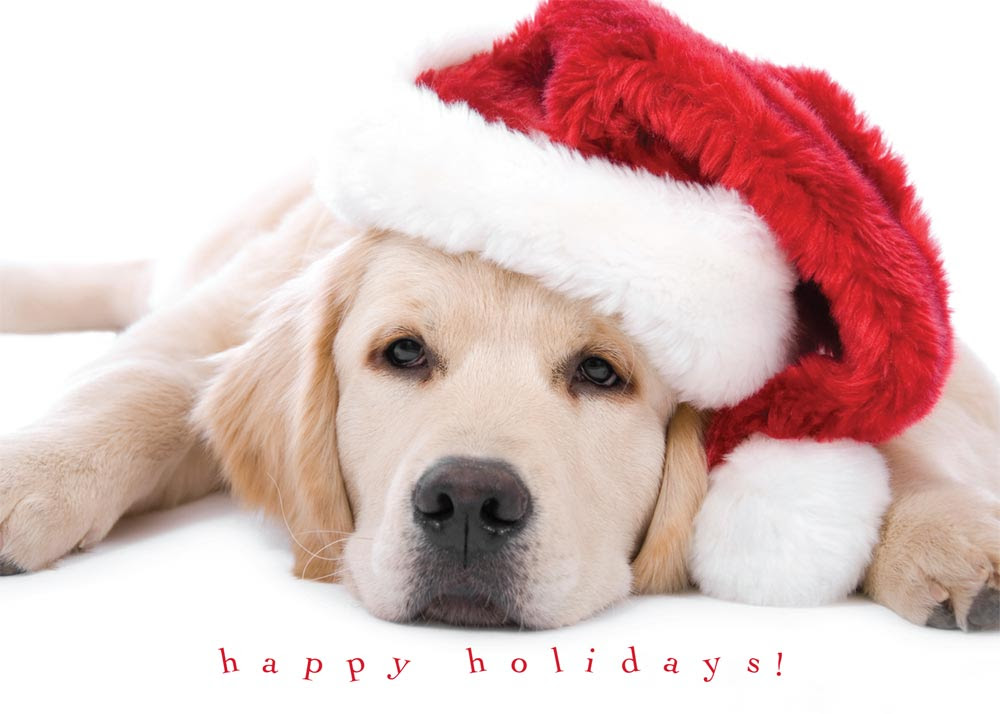 Christmas cards pet photo christmas pix cute puppy holiday christmas cards from cardsdirect m4hsunfo