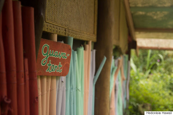guava tent outside