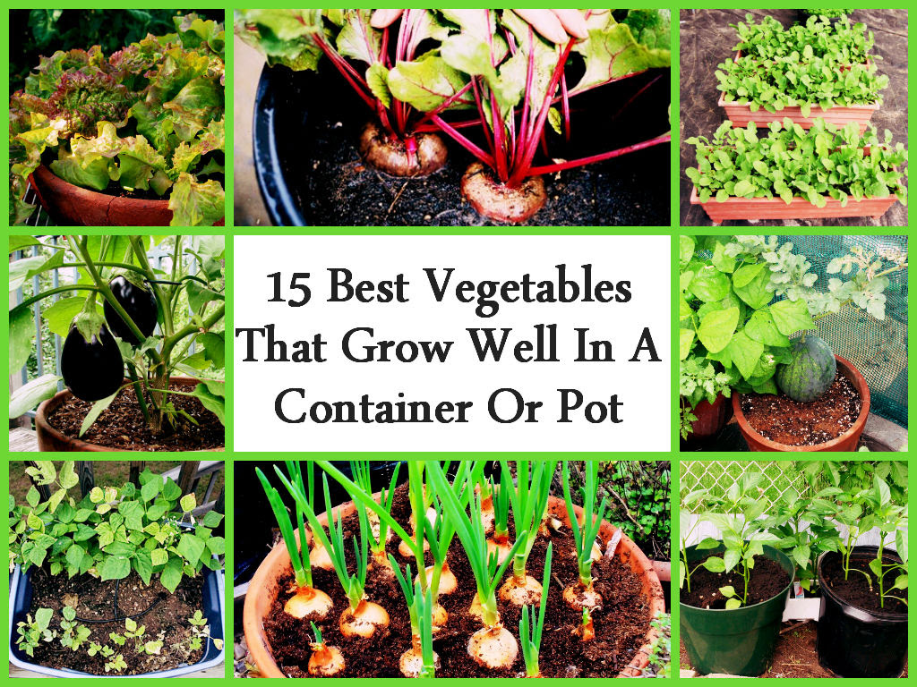 Top 15 Vegetables That Grow Well In A Container Or Pot