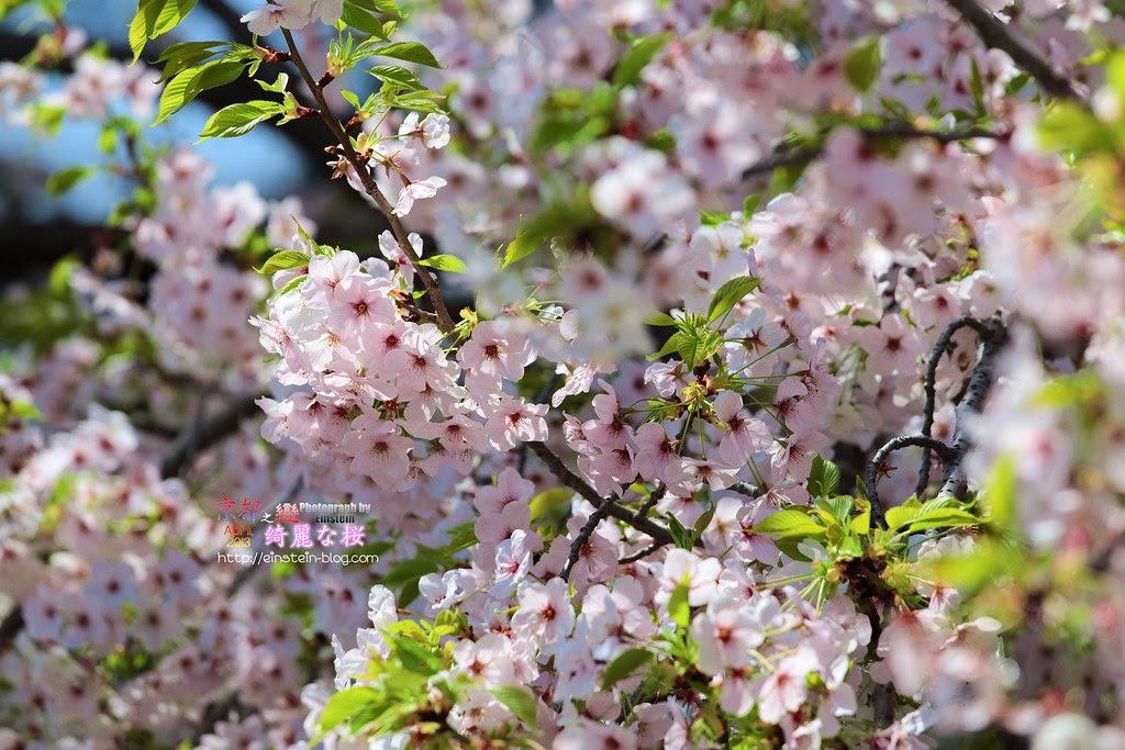 039_2013-04-05-10h50m59IMG_2268
