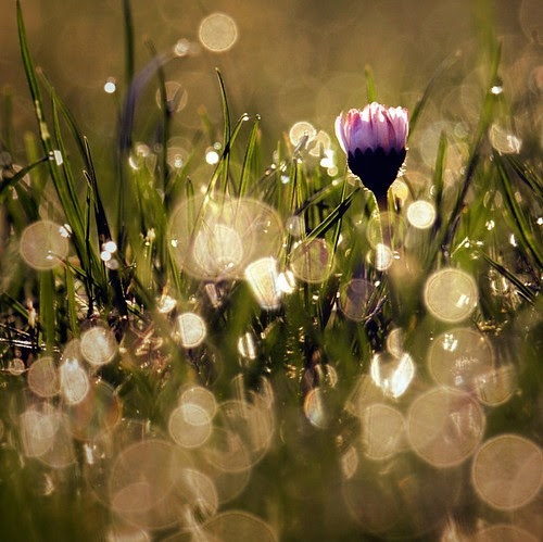 beauty, bokeh, flower, flowers, grass, green, light, nature, outdoors, photo, photograph, photography, pink, pretty, purple