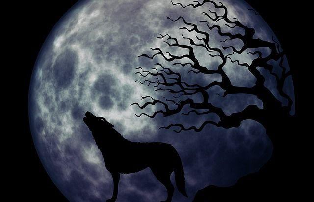 Haiku Lobo Hambriento De Luna