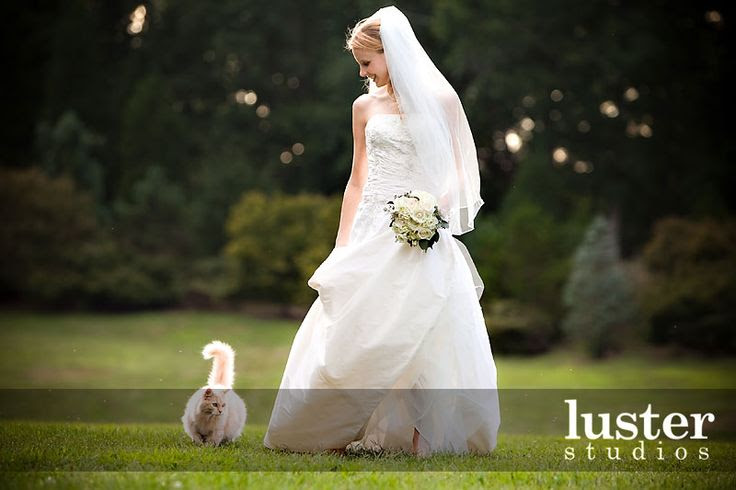 Another cute idea for wedding photo with kitty :)  @Leslie Riemen Deaton we have to do this!!! hahahaha