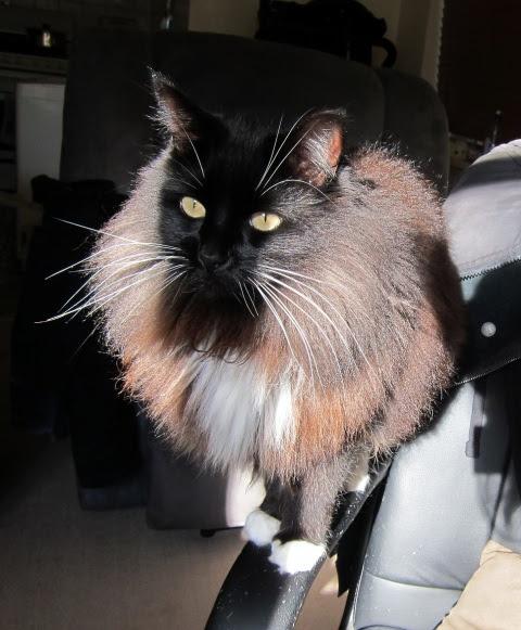 shadow-cat-1